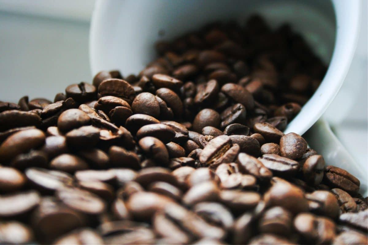 kaffee frisch halten so geht es richtig